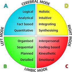 whole_brain_model