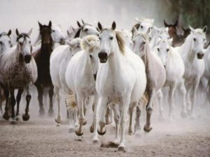 galloping-horses-745828